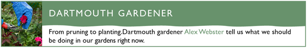 dartmouth gardener blog header620px