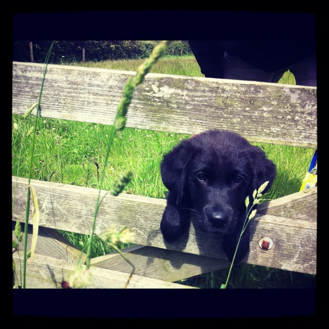 Guide Dog 3