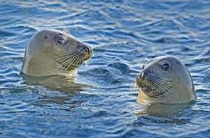 Seals on The Dart