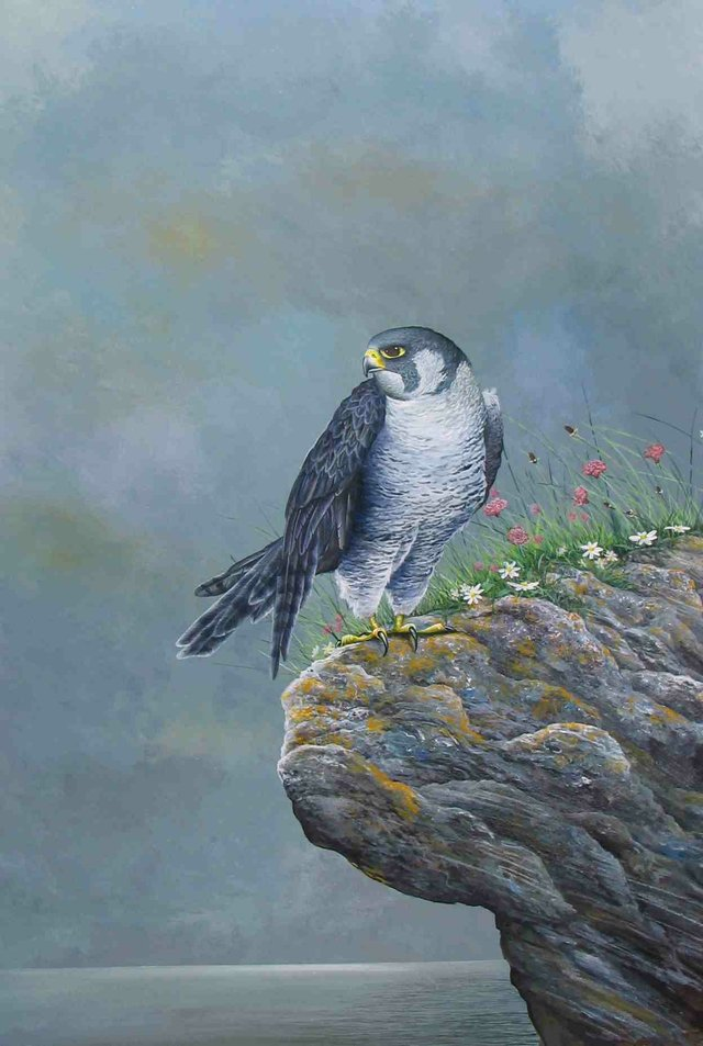 neil patey peregrine at beesands