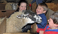 Lambing Sunday at Collaton Farm, 20 March