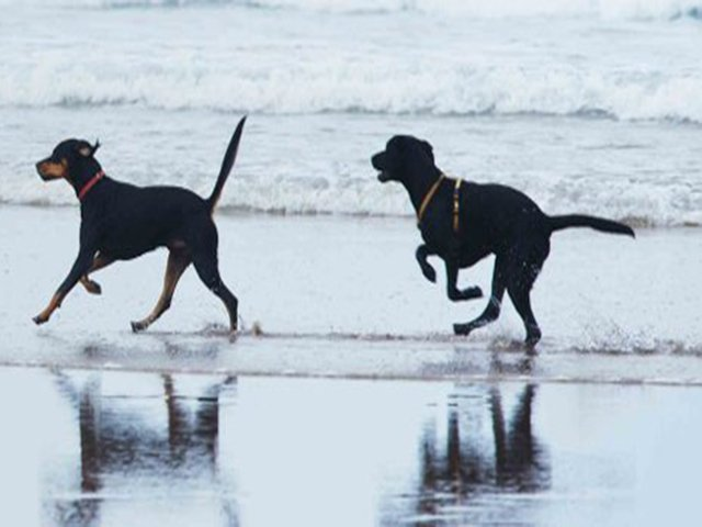 Dog Driendly Beaches